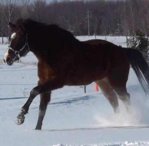 - LE Horse Training - Booking for 2012