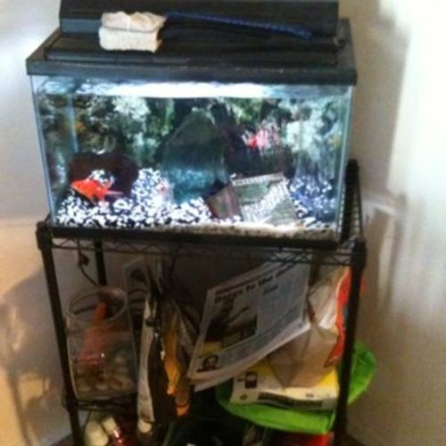 10 gallon aquarium with fish and stand