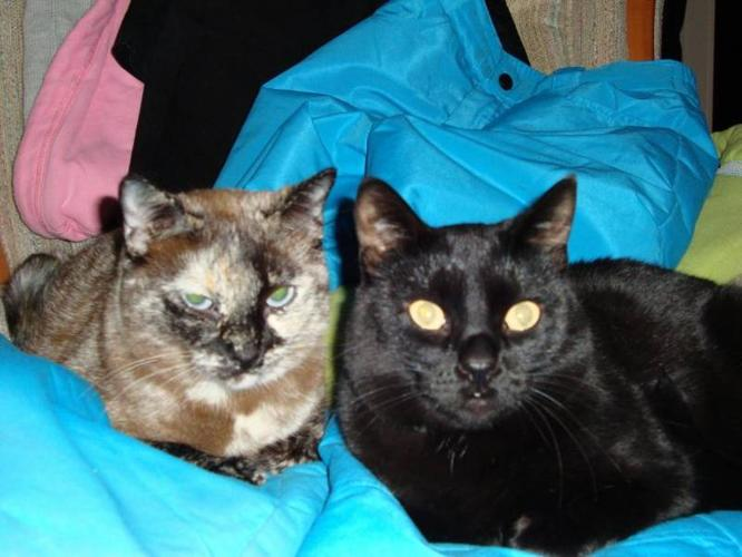 2 beautiful cats free to good homes