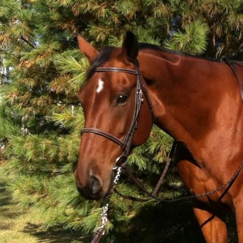 3 amazing horses fs