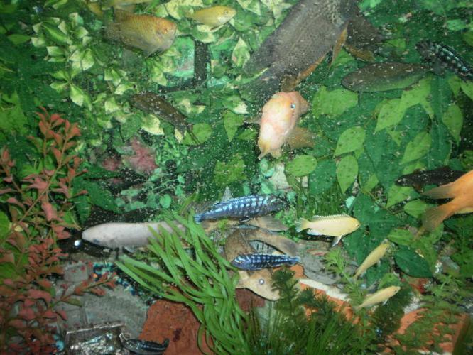 Aquarium with supplies