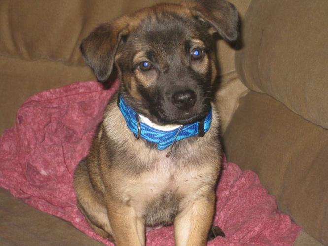 Female puppy looking for a new home