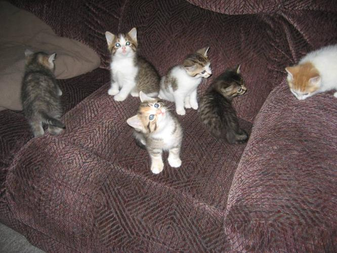Free Kittens For Sale In Port Perry Ontario Ads In Ontraio