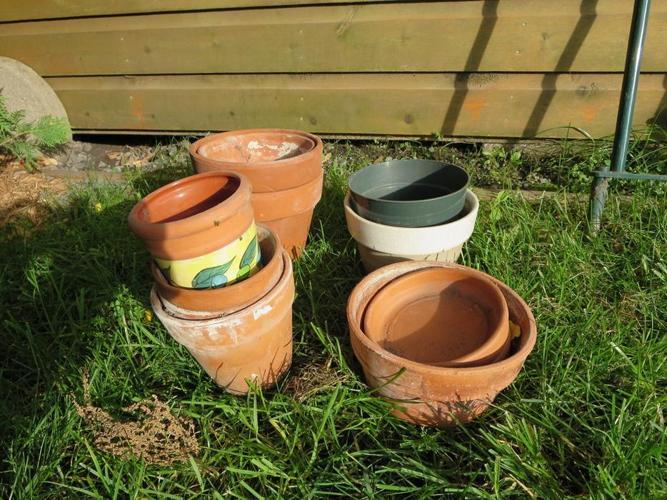 FREE: Plant pots