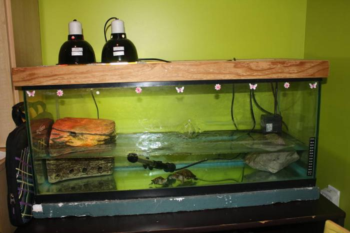 how to clean a red eared slider turtle tank
