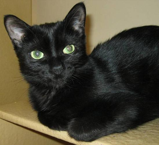 URGENT: Permanent Foster Needed for Feline Leukemia Cat