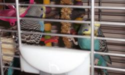 Brought birds home with cage as a gift for my baby girls 1st birthday.  My kids don't have much interest with them now.  With having a home daycare I'm so busy and not enough time set aside to interact with WOODY and JESSIE.   VISION bird cage pd. over