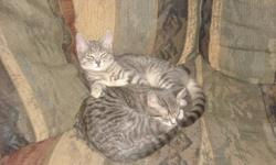 Brother and sister cat free to good home. Would really like to keep them together, am giving them up due to my fathers poor health condition, who is in the hospital in newmarket, and I will be moving there. Male cat is named Simba, who is fixed, and