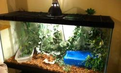35 gallon tank with heat pad, with 2 normal BP's ( Male and Female) Both snakes are about 3 feet, and eating frozen medium rats. $250 for complete setup.