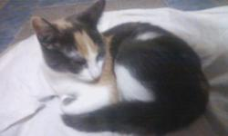 Have 5 month old kitten that needs a home She is not Declawed or fixed. She is an indoor cat. She comes with Colar And a couple cat Nips toys. May Text anytime but no calls Best Offer gets her