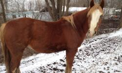 They are quarter horses Gelding rides western and female is green broke sold as pair only $1000 firm takes both. Niagara falls 905-351-9372 This ad was posted with the Kijiji Classifieds app.