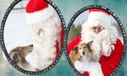 Laddie and Bambi asked Santa for something very special for Christmas- a home to call their own. Unfortunately that home hasn't come for them yet, but they're living for the first times in their lives in the comfort of a foster home. You see, Laddie and