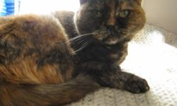 Breed: Domestic Short Hair Tortoiseshell   Age: Adult   Sex: F   Size: M DOB February 15, 2006. Snuggles is a very sweet cat but can be shy. A chaotic household is not for her, she prefers lounging on beds, sleeping in laundry baskets and sunning by the