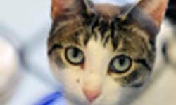 Breed: Domestic Short Hair   Age: Adult   Sex: F   Size: M JaneDoe is a girl with big green eyes and a sweet personality. She needs a quiet home with another cat prefered. She loves to be affectionate on her own terms and loves to curl up with her feline