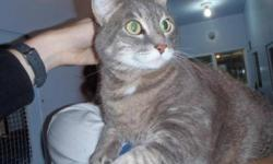 Breed: Tabby - Grey Domestic Short Hair-gray   Age: Adult   Sex: F   Size: M Adele was left behind when her family moved away. She is super friendly and cuddly. She has been waiting for some time now to find a new family. She'd make a great addition to