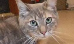 Breed: Tabby - Grey Domestic Short Hair   Age: Adult   Sex: F   Size: M DOB May 5, 2009 Callie is a beautiful young tabby girl. She came into care with her 3 other siblings Hamish, Savannah and Fluffingtion. Callie has the most beautiful face; it looks
