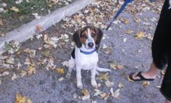 Breed: Beagle   Age: Adult   Sex: M   Size: M This is a courtesy post. For more information, please contact us at 905-263-8247       Please note that the animals in our program are available for adoption only to individuals located in the Region of Durham