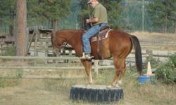 3 yr old, 15.2 hand sorrel gelding with flaxen mane.  Grandson of Great Red Pine.  Excellent trail horse, ridden in the mountains, crosses water and bridges.  Has had over 2 years of foundation training.  Trailer loads - no problem - goes over, under, and