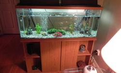 50 Gal Aquarium with full setup.(includes rocks, plants, filter pump, air bubbler, heater and stand.) Comes with 11 Mollies, 1 algae eater. As well every thing you need to maintain the tank. Less than 1 year old.