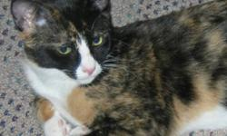 """Breed: Domestic Short Hair Calico   Age: Baby   Sex: F   Size: M Spayed, Vaccinated, DOB April 14, 2011. Brittany and her brother Simon are known in their foster family as """"Bonnie and Clyde"""" because they are quite the 'get into trouble team'. They are two"""