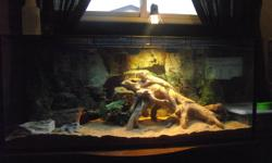 2 bearded dragons for sale approx 6 years old with tank and all accessories