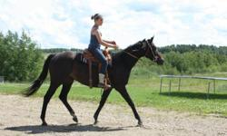 Grace is a papered 5 yr old 16 hh thoroughbred Mare. She came off the track in 2009,she is broke, I won't say well broke because she is only 5 but she is certainly level headed for her age.  We have used her mostly on trails and some quiet work in the