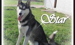 Beautiful Purebred Siberian Husky Puppies ONLY 1 PUPPY LEFT !!! We have a litter of Purebred Siberian Husky Puppies available. The puppies were born October 10th 2011. Both Parents are AKC (American Kennel Club) registered. Female 1 : AVAILABLE  Female 2