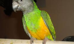 Hi,    i am offering a beautiful senegal parrot. He was handtame and handfed but due to not having being able to spend much time with him he is not tame anymore. Call and leave a voicemail on 416-837-0491 or email for more info. Need to go asap. Willing