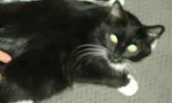 We have a 3 year old polydactyl ( 6 toes) cat and her about 10 week old kitten we cant not keep them due to the fact they dont get along with are other kittens need to go to good home mother does not like other cats so would be better to go to a family