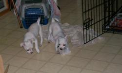have two boys looking for there forever home