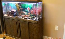 """We are selling this tank as whole with the bottom furniture.  Size of tank alone is 12"""" wide, 48"""" long, 20 1/2"""" height. It comes with approximatly; - 30 African Cichlids - 1 big algae eater - Pump and filter (fluvale 304 model) - bubbler maker (maxima"""