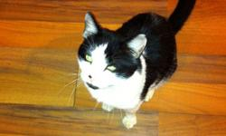 black and white very friendly needs a good home we are moving and can't bring him with us This ad was posted with the Kijiji Classifieds app.