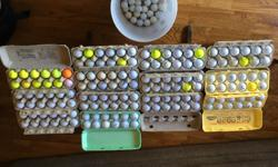Assorted used golf balls over 200 to choose from.