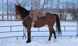 For more information and pictures please visit www.sellmyhorses.com or call 1-888-575-4360   DOB: 2002 SEX: Gelding BREED: Thoroughbred (Registered)                              HEIGHT: 15.3hh COLOR: Bay  Echo is a nicely built thoroughbred gelding that