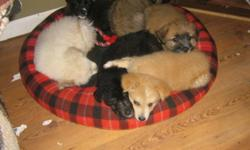 We have a variety of pups that we rescued from very poor conditions. They have been vet checked DE-wormed, and vaccinated for skin parasites.  2 females left. All very well socialized to people and kids, other dogs and cats. Breeds include  2 Shepard
