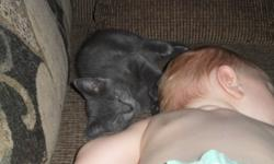 Hi my name is Leo.   I am a 5 and a half month old Russian Blue mix. I am very friendly, effectionate, and playful.  I love to play with my toys and rough around with kids. I havent yet had any shots and im not fixed yet either.   I need to find a new