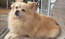 Zach is a friendly sweet boy that need a new home.  He is roughly 6 years old, is quiet and friendly with everyone. Denbigh area.  613-333-9653.