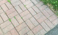 About 300 matching bricks. No I did not count them - just dug them up! They are red-ish in color. The walkway needs pressure washing. Anyway, perfect for flower bed or fire pit. Asking $40 firm.