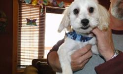 Hello we have a very loving, affectionate, energetic little boy named Mickey who is great with children and other dogs and cats. We are moving to an apartment that does not allow any pets therefore we have to  find our Mickey a loving new home. Mickey is