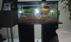 a very well behaved great starter pet for any age group. Full grown, very tame, friendly and independant. seeking a new home. comes with stand, 30 gal acquarium, light, screen lid, background (COMPLETE SET UP)