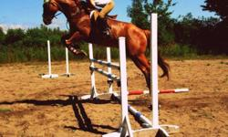 Legend is a 10 year old quarter horse gelding and is 16 hh. He is jumping 4 feet and has lots of potential to go higher. He has done barrel racing and is an ex race horse, so he has done some of everything. good for novice and experienced riders. His