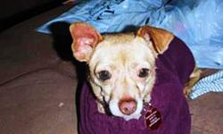 Tiny is an approximately 1 year old female Chihuahua cross. She is sweet & loves to cuddle. No cats please! If you are interested in adopting Tiny, please fill out an application at: http://www.pawsitivematch.org/Adopting.php *Check out more adoptable