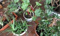 I have a selections of house plants ranging $5 and up. Part of an estate sale