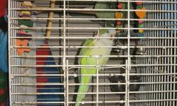 2 yr old male quaker parrot. Hand raised, green with quaker colours. He can say I love you, Quaker, pretty bird and other assorted words and phrases.  He gives kisses on the lips if you signal to kiss.  He flys to you when called. Has been around cats and