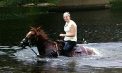 Registered Quarter horse mare 9 years old, 14.3HH, trained for gaming, a real pretty girl, awesome for trail rides, very willing, will go through anything (including thick bush, mud, water etc..) Very good with kids, up to date with EVERYTHING including