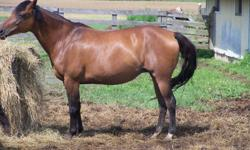 For Sale Registered Quarter and Paint Horses Yearlings, 4 Year Old, 5 Year Old, 6 Year Old, Several 8 year old, 10 year old mare, and 2 AQHA broodmares. All have working bloodlines. Most ride nicely. Have done lots of pen work, some have been on trail