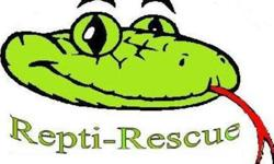 """""""E & P REPTILE RESCUE"""" E & P IS ONCE AGAIN IN A POSITION TO ACCEPT UNWANTED REPTILES FOR WHAT EVER THE REASON MAYBE. WHETHER YOUR REPTILES IS SICK, BEEN FOUND SOMEWHERE, GROWN TOO LARGE OR IS SIMPLY TOO AGGRESSIVE, WE AT E & P REPTILE RESCUE HAVE THE"""