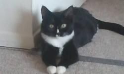 Hi I have a black and white female cat that I rescued from my work. It has its shots and the vet placed its age between six and eight months old although we do not kno its exact age. We already have two adult cats. Hate to give away such a wonderful kitty