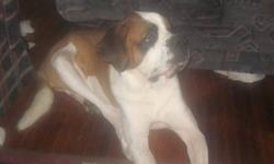 This is very sad  for our family we have to move and will no longer be able to accommodate the room he needs. Buddy is a pure breed saint Bernard and very friendly. He has grown up with baby's and is so very gental with kids hes still a puppy so he gets