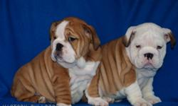 VICTORY BULLDOGS   Has some outstanding Male and Female English Bulldog Puppies Now Available out of Rodney and Ready to go this week they will be 9 weeks on the 18th of January!  This was a very anticipated repeat breeding!  We had some outstanding